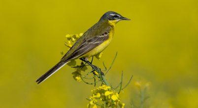 Hogyan fotózzunk madarakat, zavarásuk nélkül?