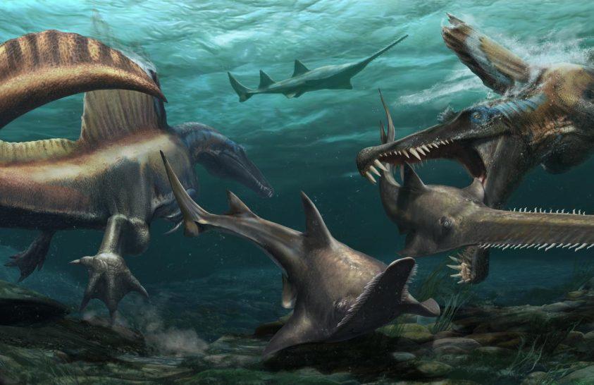 A bizarr Spinosaurusról kiderült, hogy igen jó úszó volt