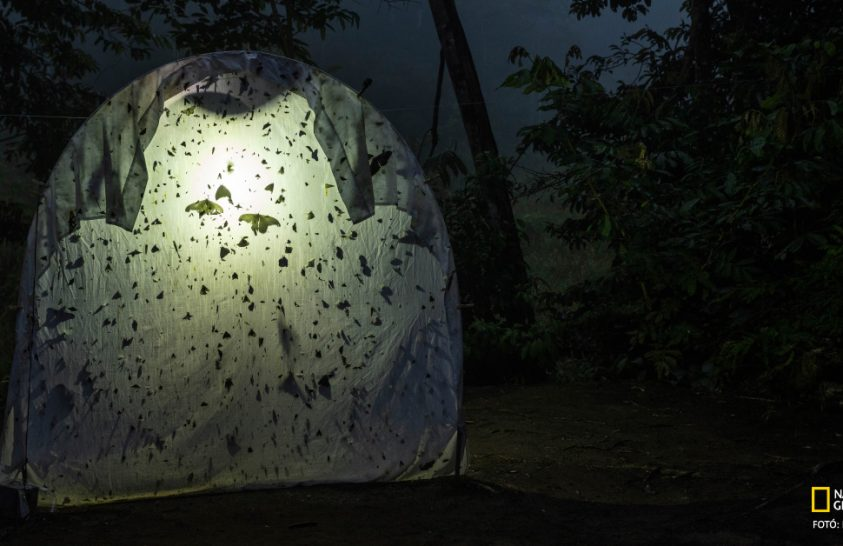 Hova lett a sok rovar?