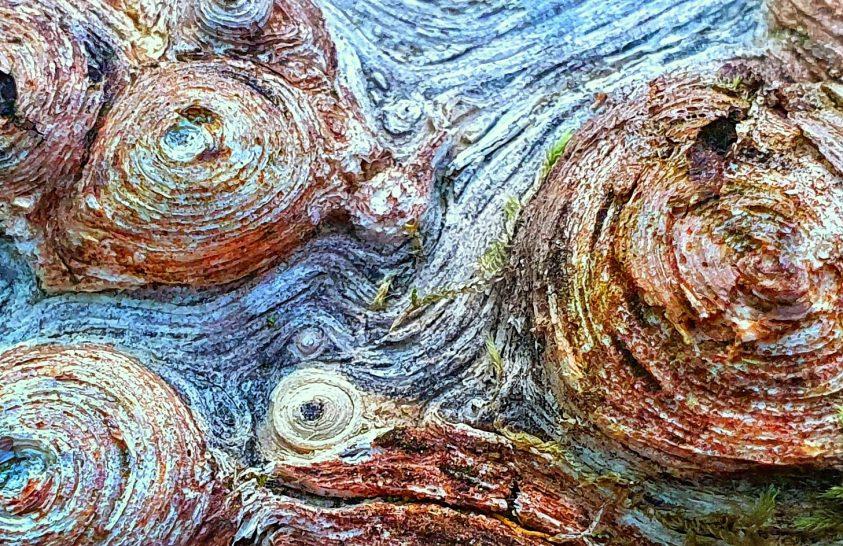 A nap képe: Van Gogh: Croissantok