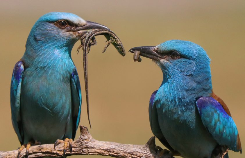 A nap képe: A boldogság kék madarai