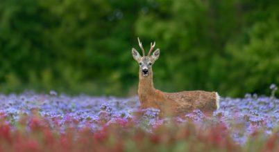 A nap képe: Virágos mezők őrzője