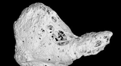 Különleges csontra bukkantak a csimpánzok szívében