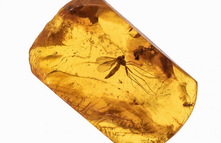 Így kerültek a vízirovarok a borostyánkövekbe