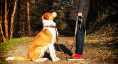 A kutyák is képesek emlékezni saját cselekedeteikre