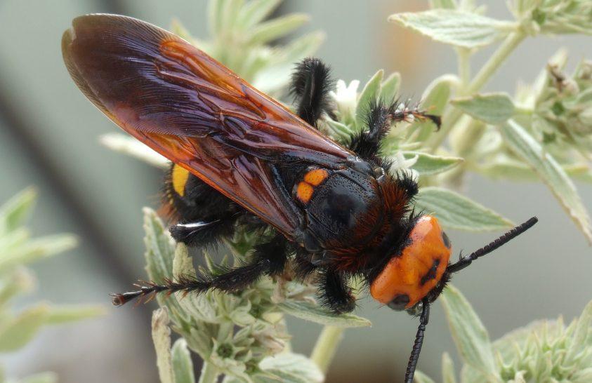 Óriások küzdelme a rovarok világában