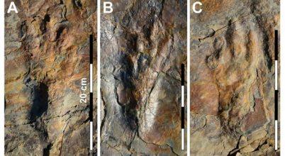 Dinoszaurusz-szerű őskrokodilok lábnyomaira bukkantak Dél-Koreában