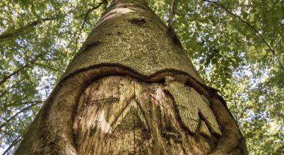 Mesélő fák