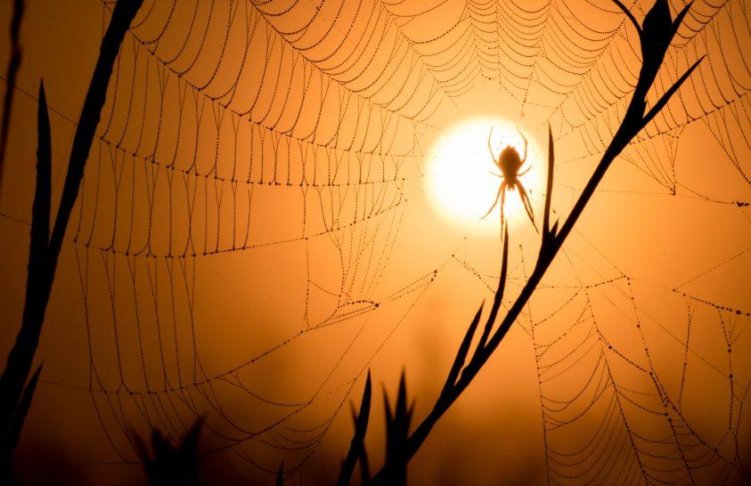 A nap képe: A nap nagy fogása