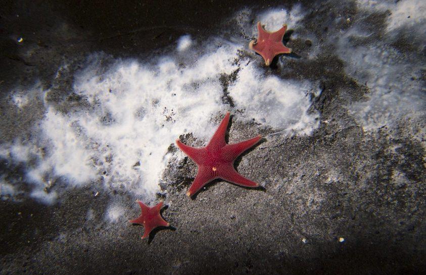 Rábukkantak az Antarktisz első aktív metánszivárgására