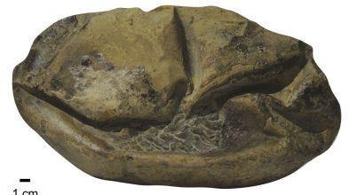 Tényleg a moszaszauruszé lehet ez a jókora tojás?