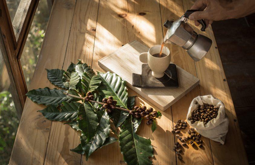A természetes koffein hatása a mesterségessel szemben