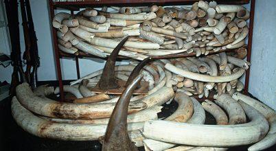 Az ENSZ jelentése az elmúlt évek illegális állatkereskedelméről