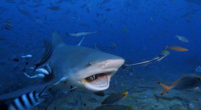 Soha nem látott cápás felvételek