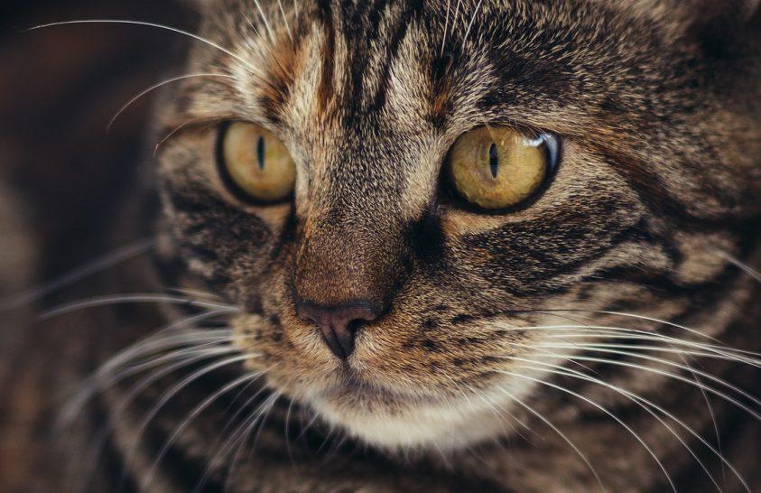 Így élt egy macska a középkori selyemútnál