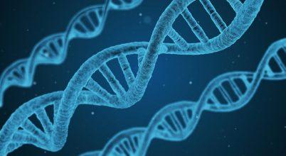 Neandervölgyi gén befolyásolhatja a fájdalomérzetet