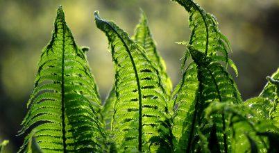 Miért zöldek a növények?