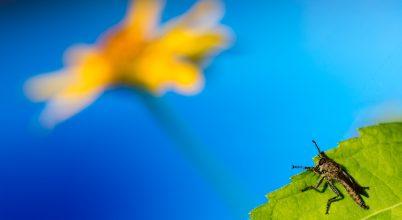 A nap képe: Rablólégy virággal