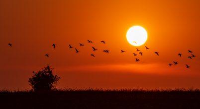 A nap képe: Vadludak napkelte után