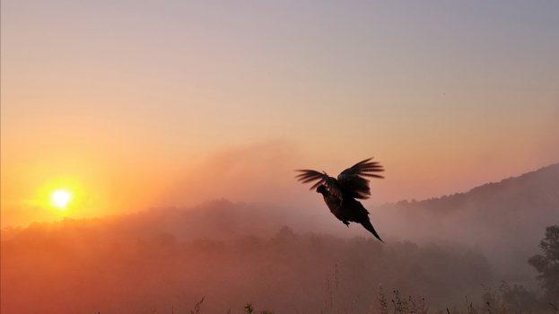 A nap képe: Hajnali nap árnyékában