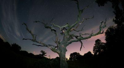 A nap képe: Az öreg tölgy estéje