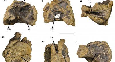 Egy korai óriás dinoszaurusz maradványait fedezték fel Svájcban