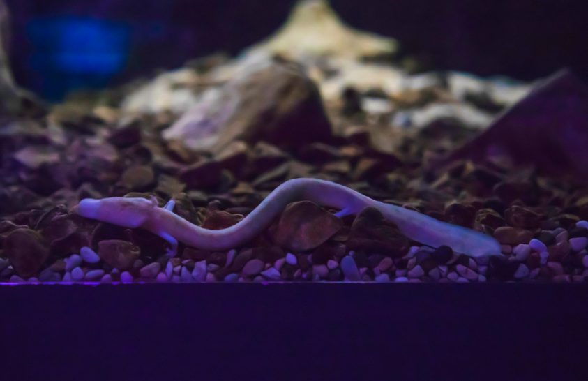 Egy titokzatos barlangi faj szaporodása várható