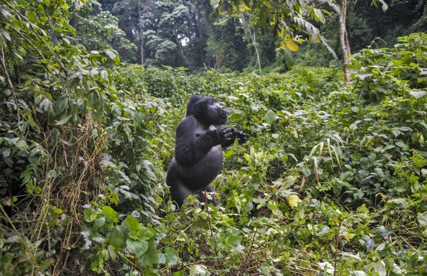 Virtuális szafari Ugandába