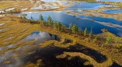 Hatalmas mamut maradványai kerültek elő egy szibériai tóból