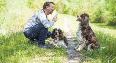 Mi történik a kutyák agyában, amikor hozzájuk beszélünk?