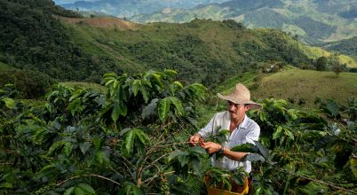 A jövő kávéja, a kávé jövője: így születnek újjá világszerte az elpusztult kávétermő területek