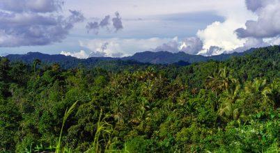 Új-Guinea a világ növényekben leggazdagabb szigete