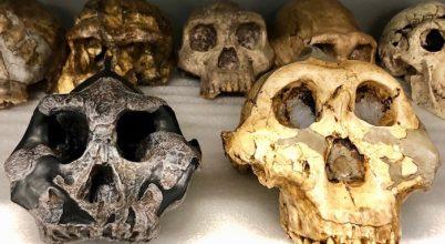 Mit ettek az emberősök 2-3 millió éve?