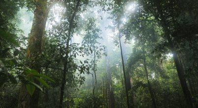 A kis fák menthetik meg az esőerdőket