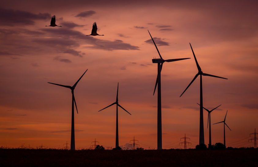 70 százalékkal csökkenthető a madárbaleset a szélerőműveknél