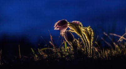A nap képe: Éjféli lány