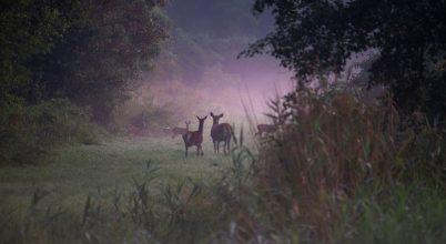 Hajnali találka