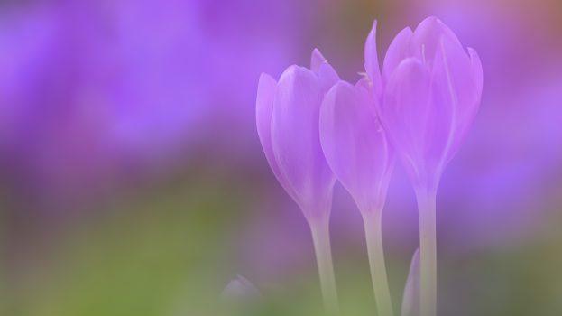 A nap képe: A lila ködön túl