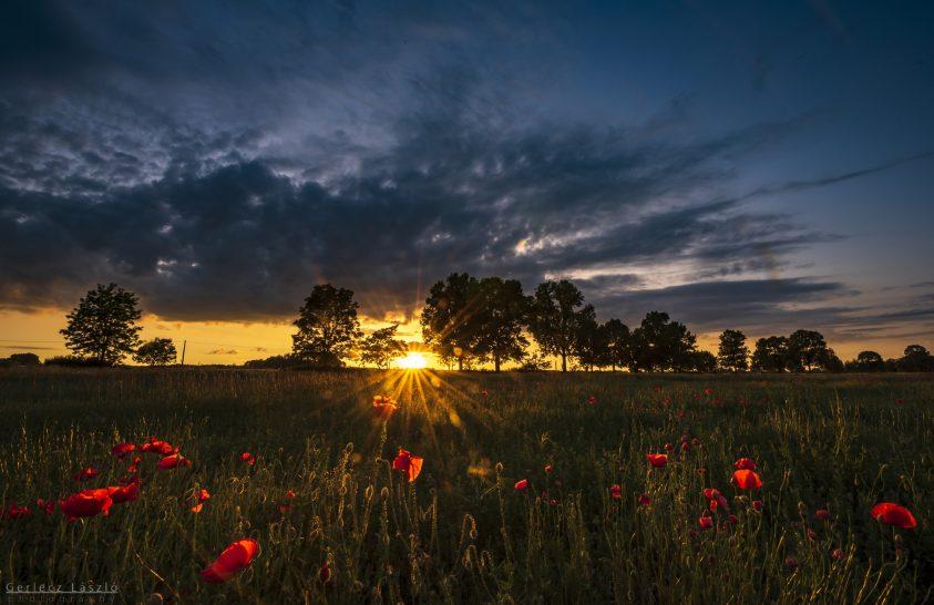 A nap képe: Az út mentén