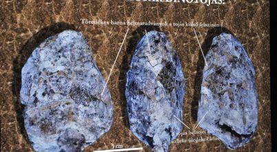 Íme az első magyarországi dinoszaurusztojás