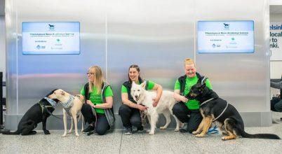 Kutyák segíthetenek kiszűrni a koronavírusos utasokat Helsinki repterén