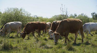 Pásztorok és ökológusok fogtak össze a fajgazdag gyepek jobb hasznosításáért