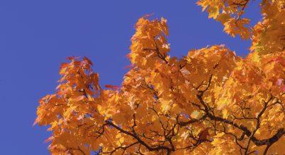 Ezek a fák adnak nagyobb védelmet a káros UV-sugárzás ellen