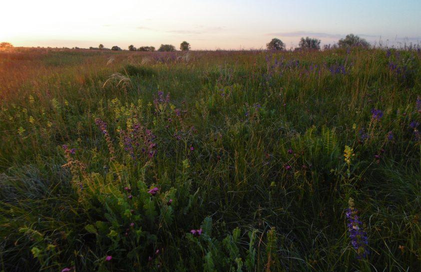 Őshonos gyepi élőhelyeket védelmez Pest-megyében