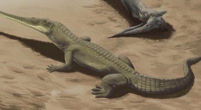 Krokodilszerű őshüllők kövületeire bukkantak Dél-Afrikában