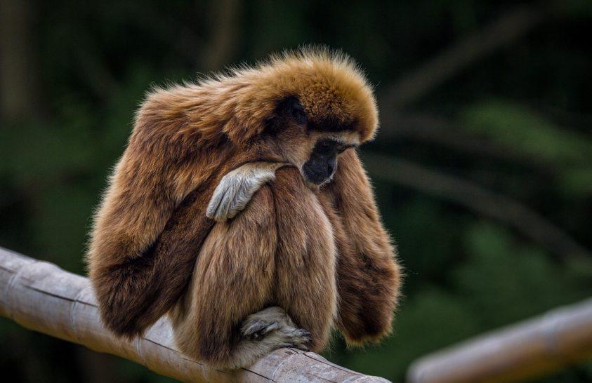 Kihalt majomfajt fedeztek fel Indiában