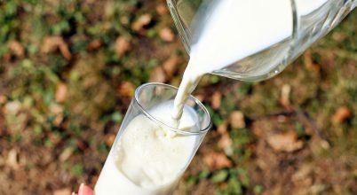 Mióta képes szervezetünk megemészteni a tejet?