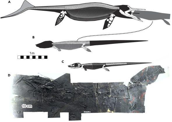 Saját falánksága okozhatta a mohó halgyík vesztét