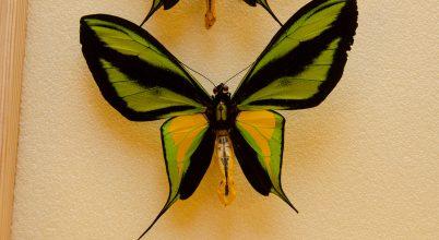 A biológiai sokféleségről szóló ismereteink alapkövei
