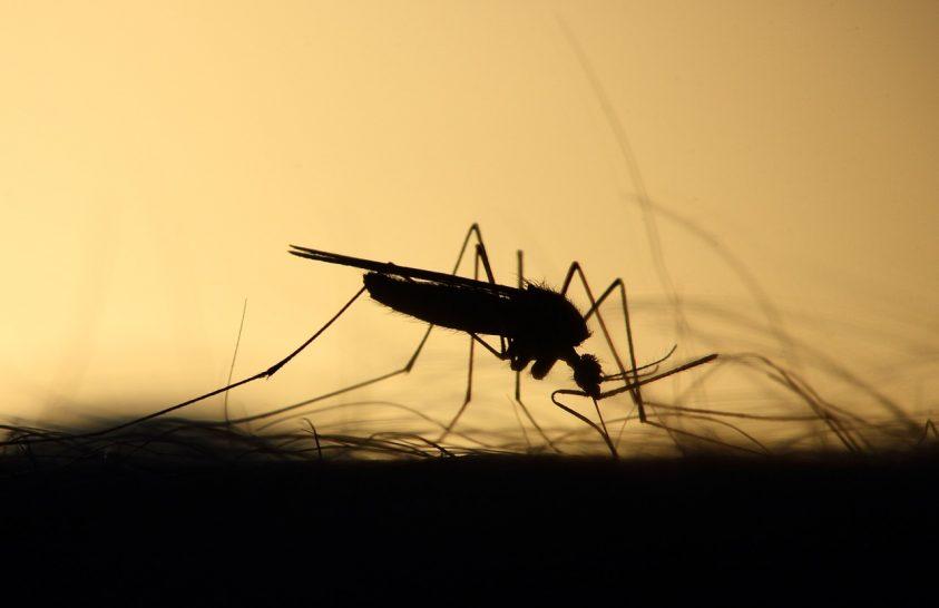 A zavart ökoszisztémában jól élnek a betegséget terjesztő szúnyogok